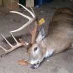 deer-nice-rack-crop